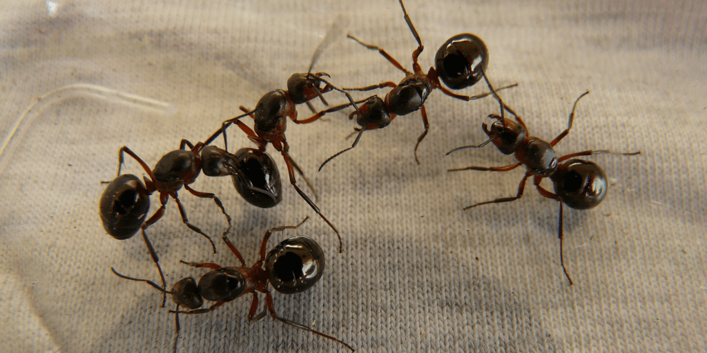 ants on cloth.