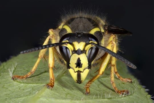 A close up view of a