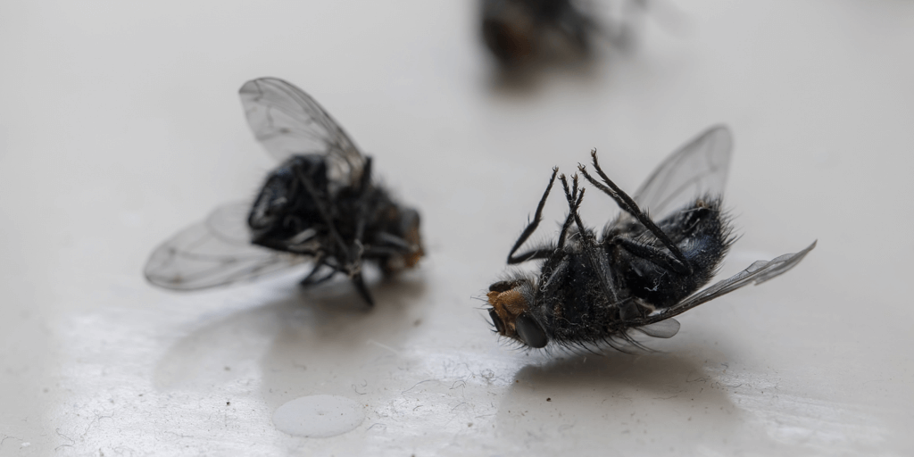 two flies dead on a surface.