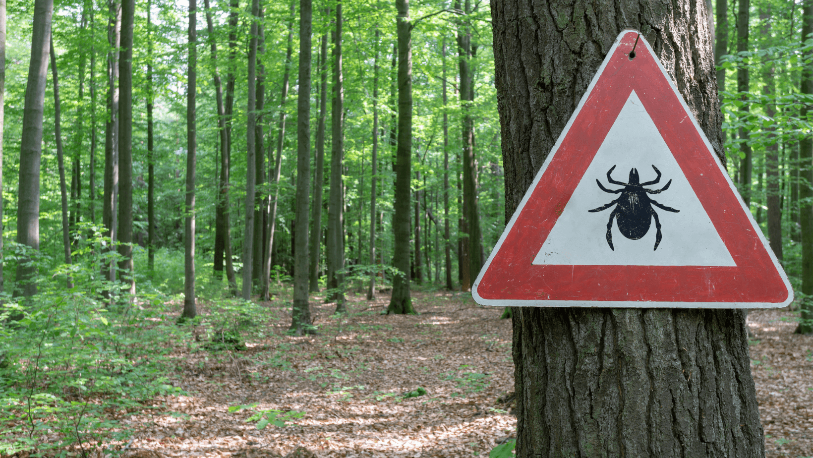 Beware of tick sign on tree in the forest.