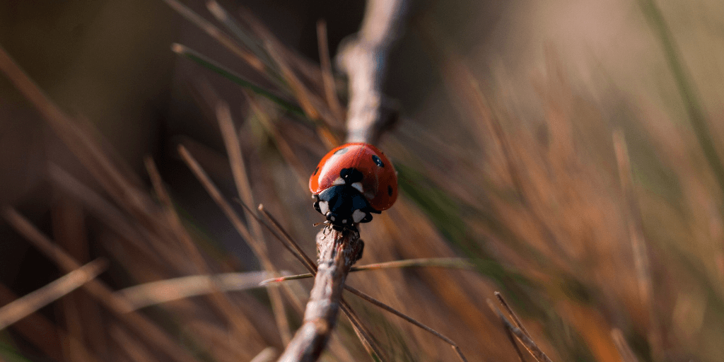 Lady bug on a stem.
