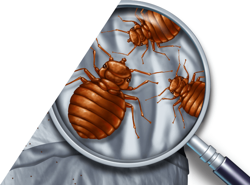 Bed Bugs Charleston Sc Detection Amp Extermination